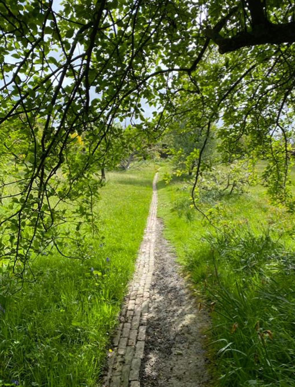 A hidden country trail in the Rye countryside