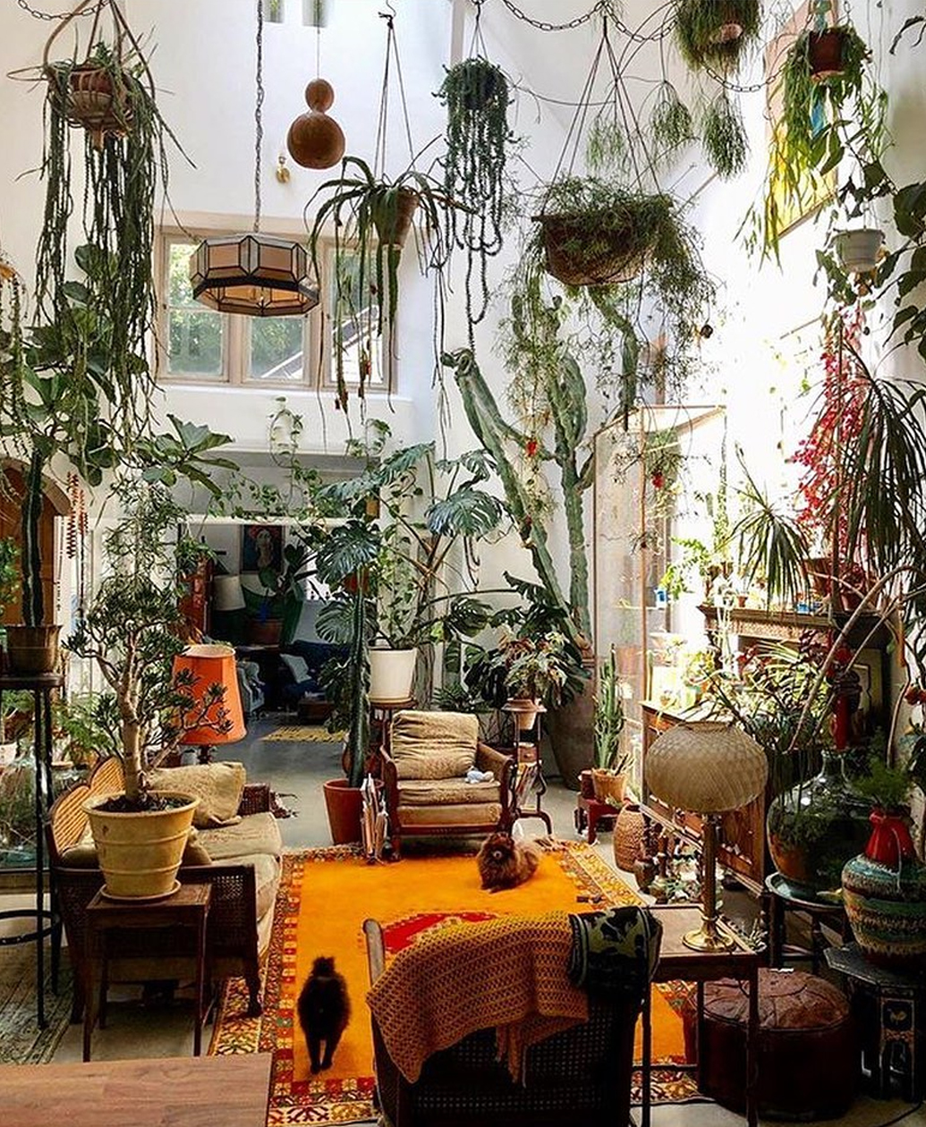 Indoor Plant Goals via @plantsindecor from the conservatory archives.