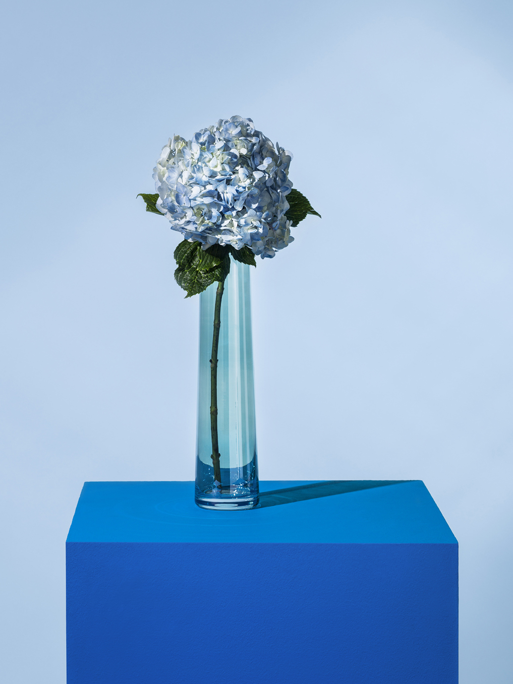 It's All In The Vase, Go blue with a singule hydrangea in a complementary blue glass vase.