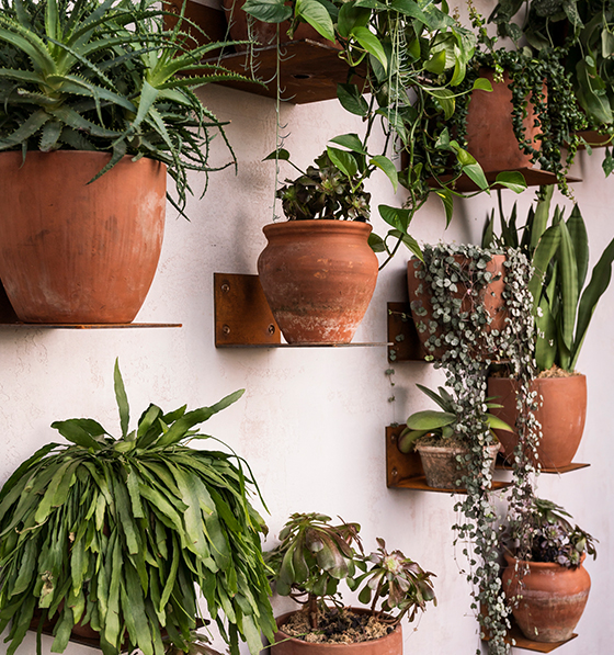 House plant parenting course from Patch Plants