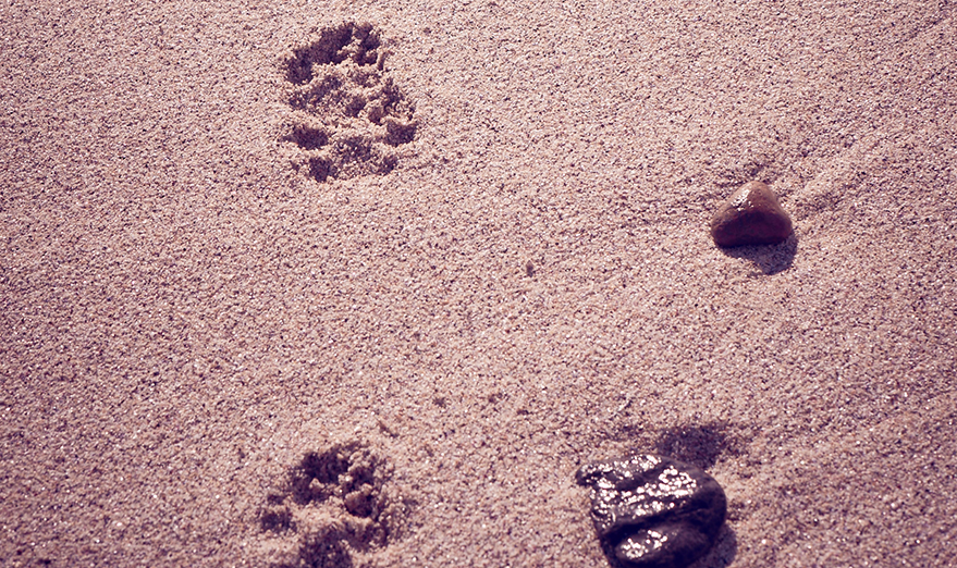 Images of the sea waves and paw prints in the sand