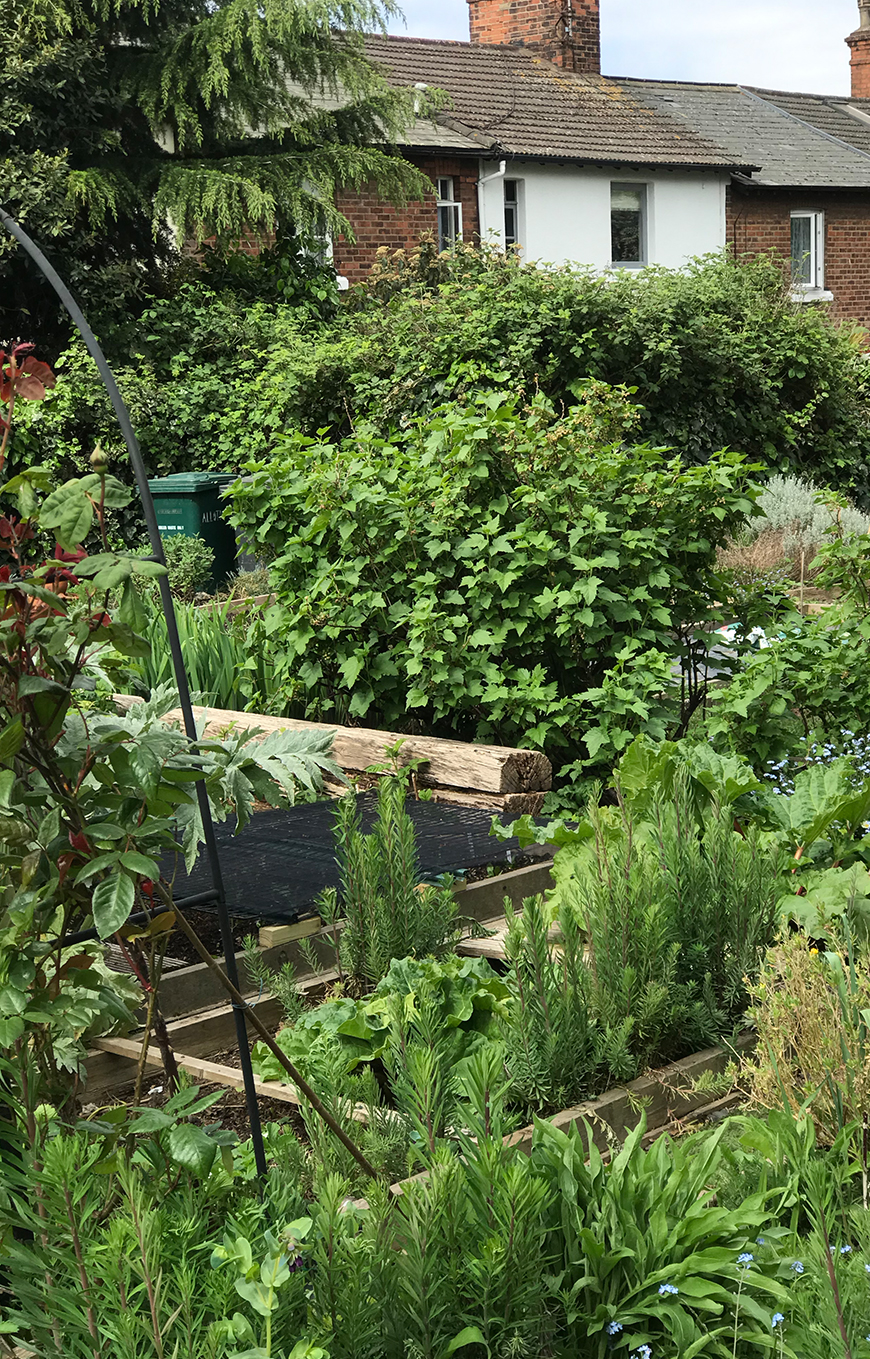 The lush greenery of Rosarie's london allotment